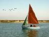 clubboatlapwing